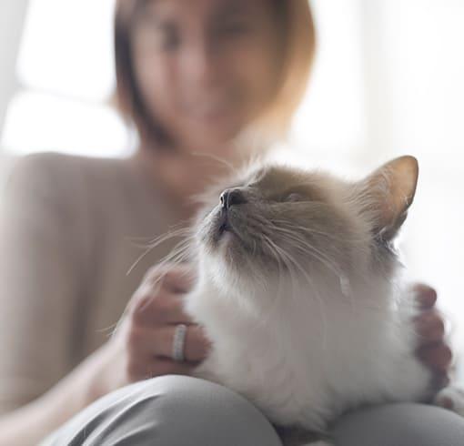 Pet Sitting 1