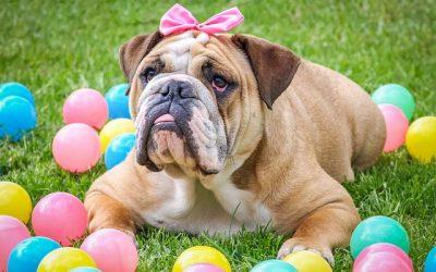 Hugs for Hounds Doggy Easter Egg Hunt