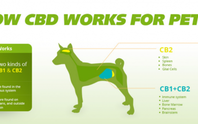 4 Health Benefits of CBD Oil for Pets