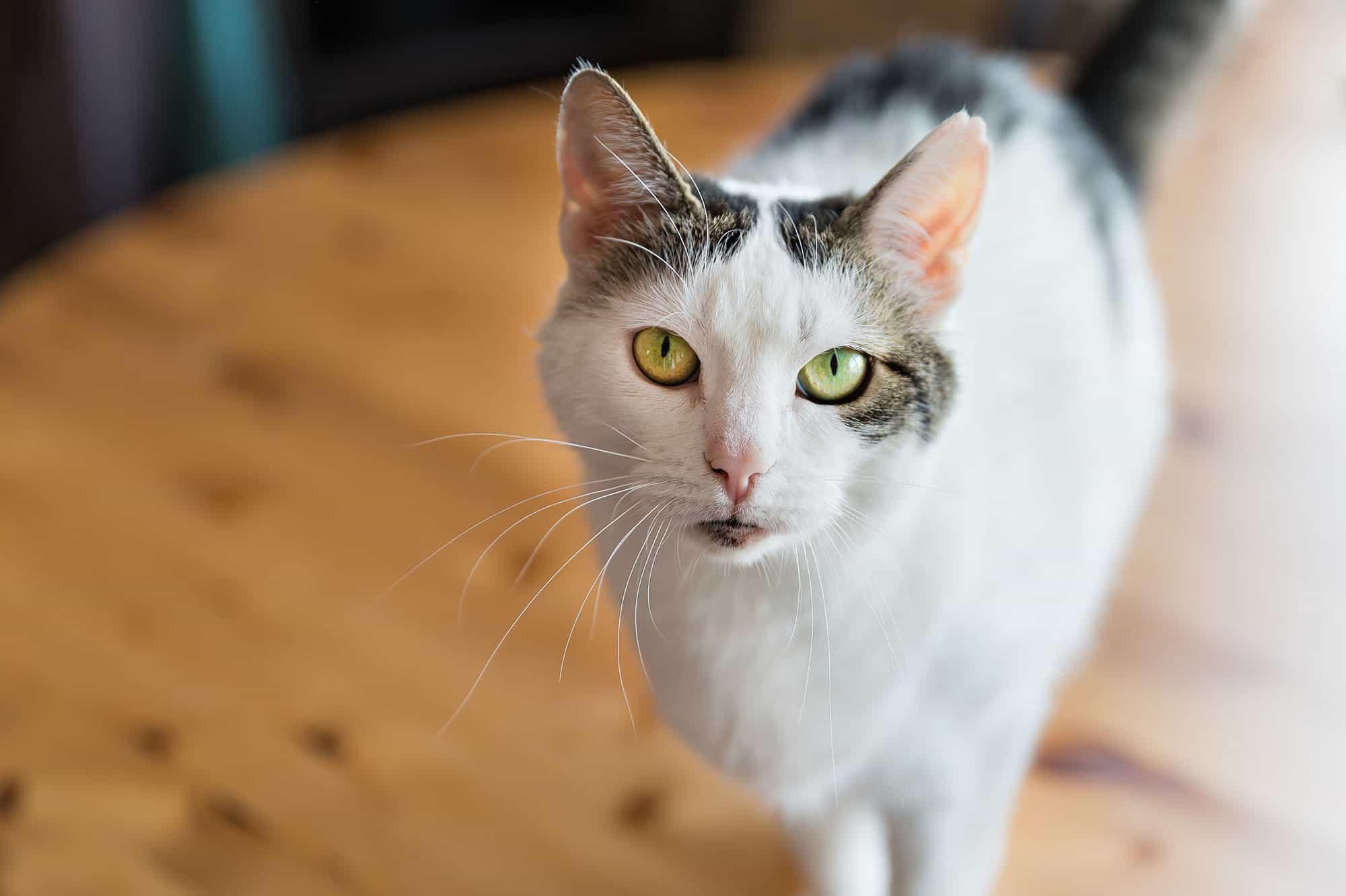 Cat Care 2