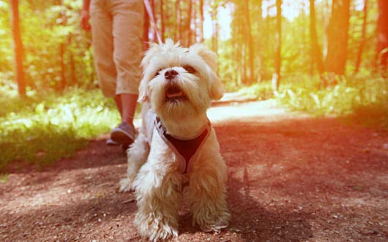 5 Things to Look For in a Dog Walker in Plainfield/Joliet