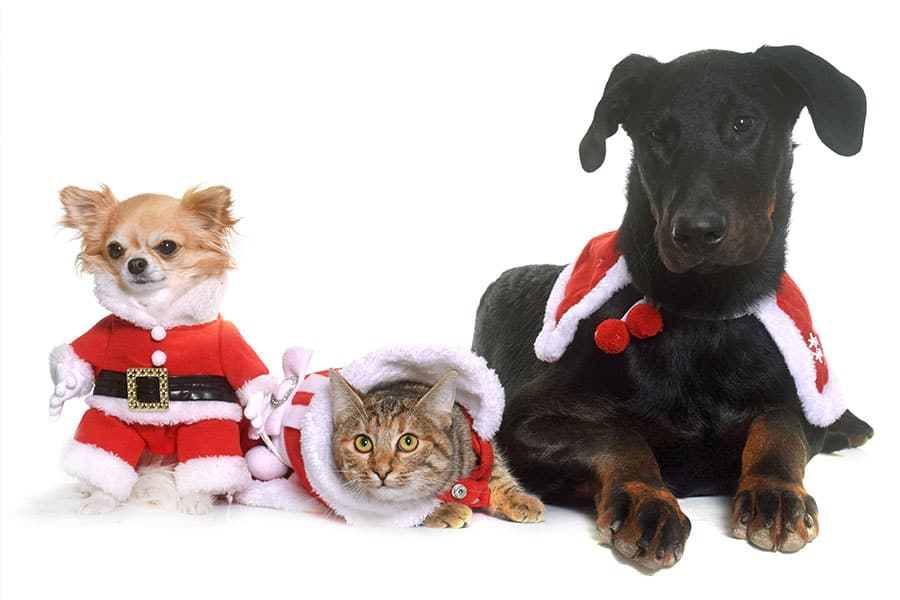 5 Ways to Prepare Your Pet for the Holidays in Plainfield/Joliet