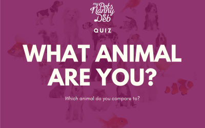 Quiz: What Animal Are You?