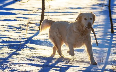 5 Winter Activities for You and Your Dog in Plainfield/Joliet