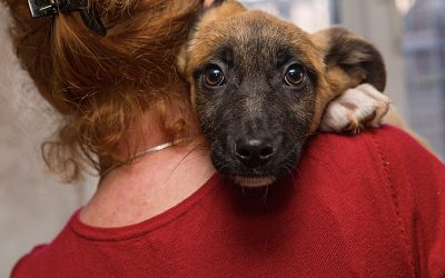 Top Five Animal Rescues in Plainfield Joliet